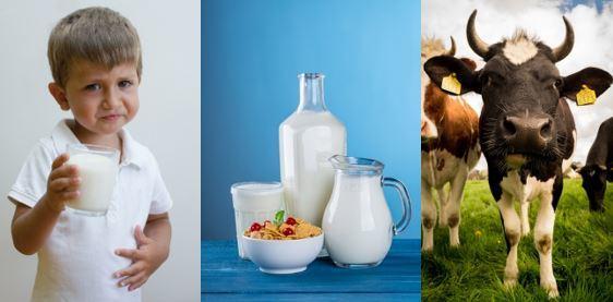 wie gesund ist die Milch wirklich